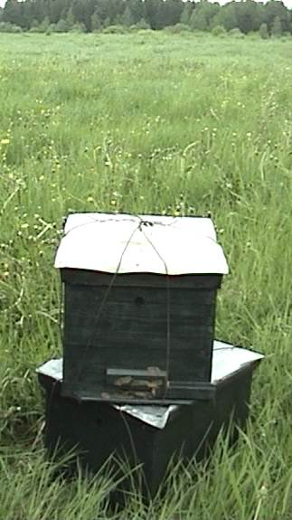 Для чего ставят ловушки на пчел